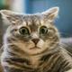 Аватар пользователя pro1005