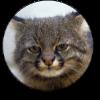 Аватар пользователя sapph1re