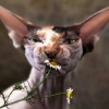 Аватар пользователя WindChime