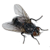 Аватар пользователя livexp2