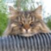 Аватар пользователя silikosha
