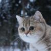 Аватар пользователя W1ldCat