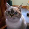 Аватар пользователя Byben4ik
