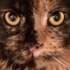 Аватар пользователя kubabura