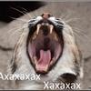 Аватар пользователя TiredLynx