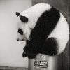 Аватар пользователя Feihua