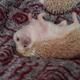 Аватар пользователя MadHedgehog