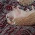 MadHedgehog