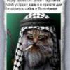 Аватар пользователя Bushmans