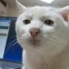 Аватар пользователя snPomidor