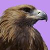 Аватар пользователя Eagle888