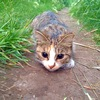 Аватар пользователя Spitzbuben