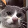 Аватар пользователя Stee