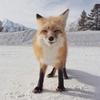 Аватар пользователя Kaiya07