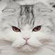 Аватар пользователя poznikidze