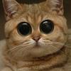 Аватар пользователя Nickoteen