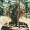 Аватар пользователя HayaSunny