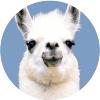 Аватар пользователя leysanrain