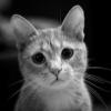 Аватар пользователя Stelscat