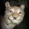 Аватар пользователя Stik64