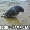 Аватар пользователя Yaztromatos