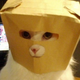 Аватар пользователя SeeFear