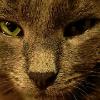 Аватар пользователя billyshmilly