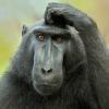 Аватар пользователя pi4uga