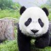 Аватар пользователя Bali710