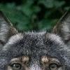 Аватар пользователя wolf734