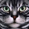Аватар пользователя Yzbagoin4ikBro