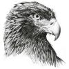 Аватар пользователя severin812