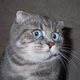 Аватар пользователя Bljat