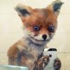 Аватар пользователя Redley