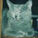 Аватар пользователя sanek21rus