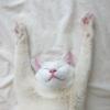 Аватар пользователя redmas