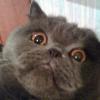 Аватар пользователя alexdevona