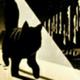 Аватар пользователя CYBERNOiD