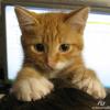 Аватар пользователя Emilist
