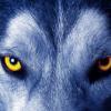 Аватар пользователя akela284