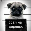 Аватар пользователя burmitr