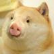 Аватар пользователя shnorkel