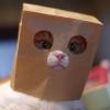 Аватар пользователя Susik