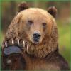 Аватар пользователя pawbear