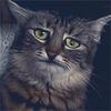 Аватар пользователя Zema333