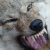 Аватар пользователя Werwolf88