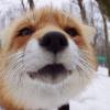 Аватар пользователя klimenko74