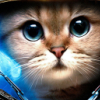 Аватар пользователя KOTbI