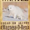 Аватар пользователя MagnessDRen