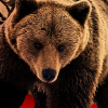 Аватар пользователя medvedvedmed